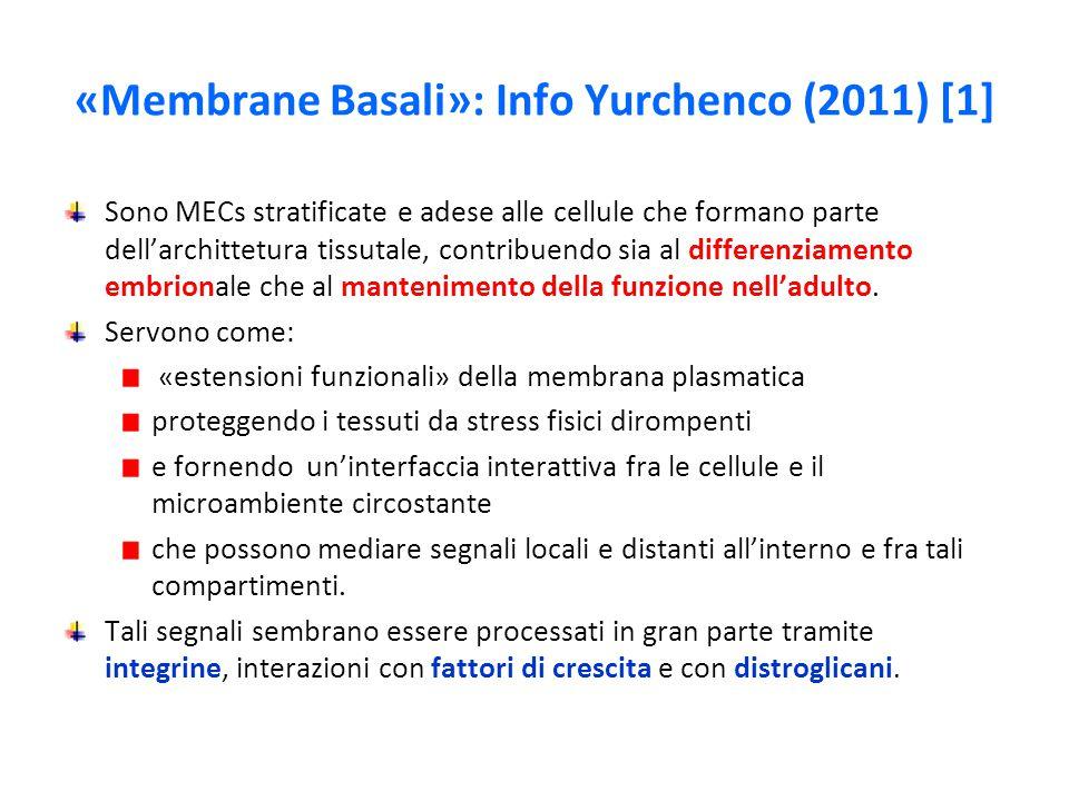 «Membrane Basali»: Info Yurchenco (2011) [1] Sono MECs stratificate e adese alle cellule che formano parte dell'archittetura tissutale, contribuendo sia al differenziamento embrionale che al mantenimento della funzione nell'adulto.