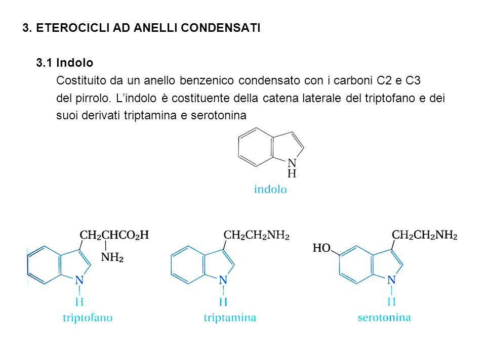 3. ETEROCICLI AD ANELLI CONDENSATI 3.1 Indolo Costituito da un anello benzenico condensato con i carboni C2 e C3 del pirrolo. L'indolo è costituente d
