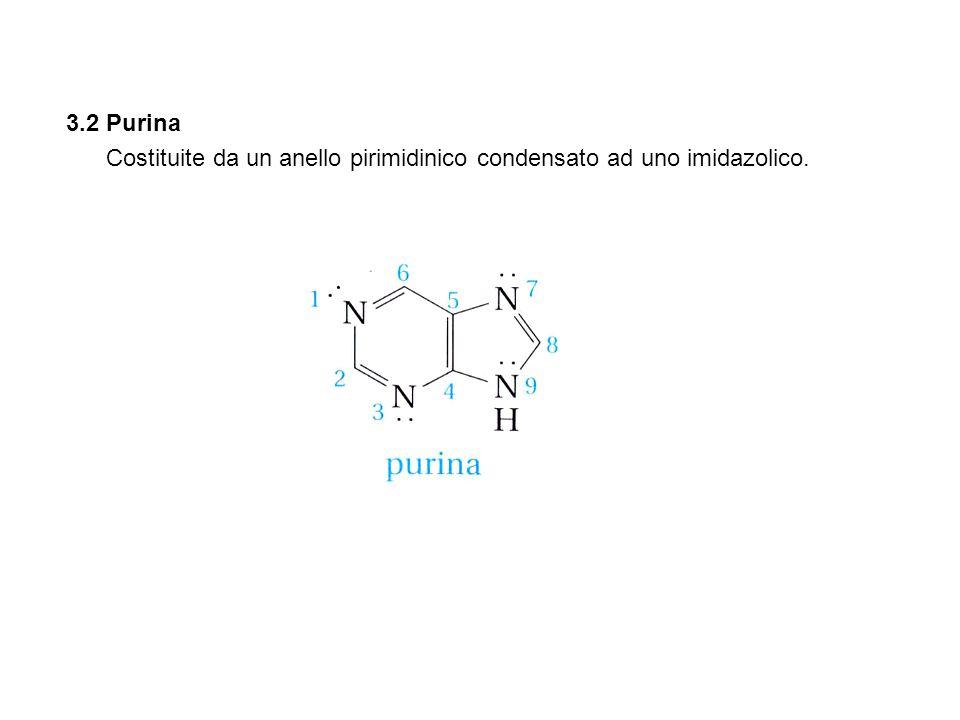 3.2 Purina Costituite da un anello pirimidinico condensato ad uno imidazolico.