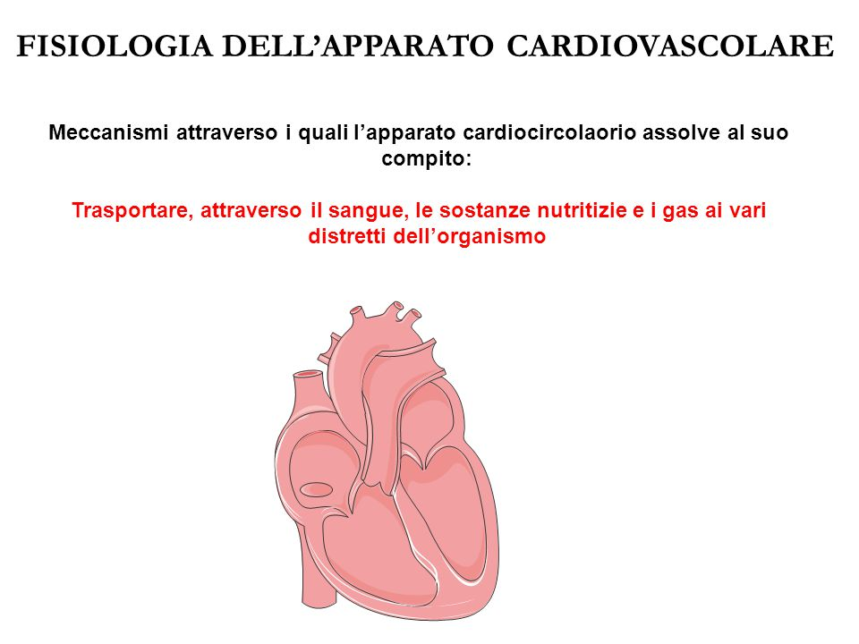 FISIOLOGIA DELL'APPARATO CARDIOVASCOLARE Meccanismi attraverso i quali l'apparato cardiocircolaorio assolve al suo compito: Trasportare, attraverso il sangue, le sostanze nutritizie e i gas ai vari distretti dell'organismo