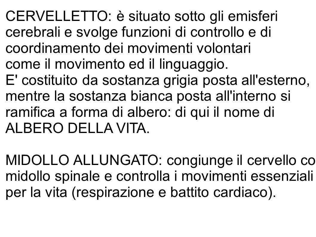 CERVELLETTO: è situato sotto gli emisferi cerebrali e svolge funzioni di controllo e di coordinamento dei movimenti volontari come il movimento ed il linguaggio.