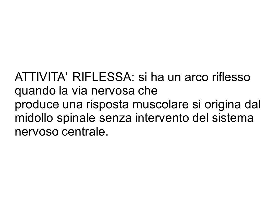 ATTIVITA' RIFLESSA: si ha un arco riflesso quando la via nervosa che produce una risposta muscolare si origina dal midollo spinale senza intervento de