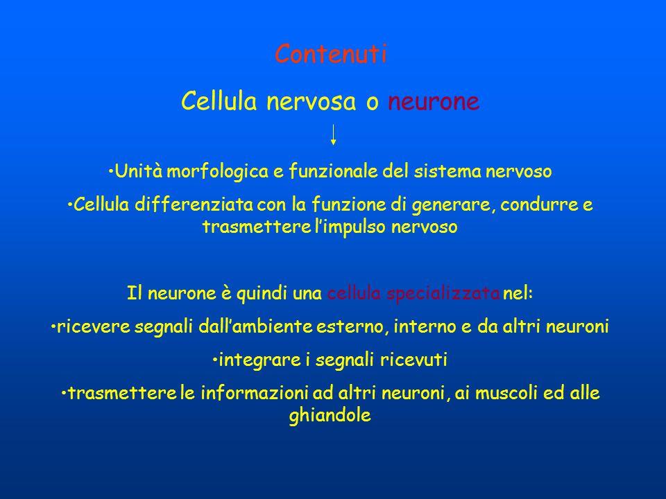 Contenuti Cellula nervosa o neurone Unità morfologica e funzionale del sistema nervoso Cellula differenziata con la funzione di generare, condurre e t
