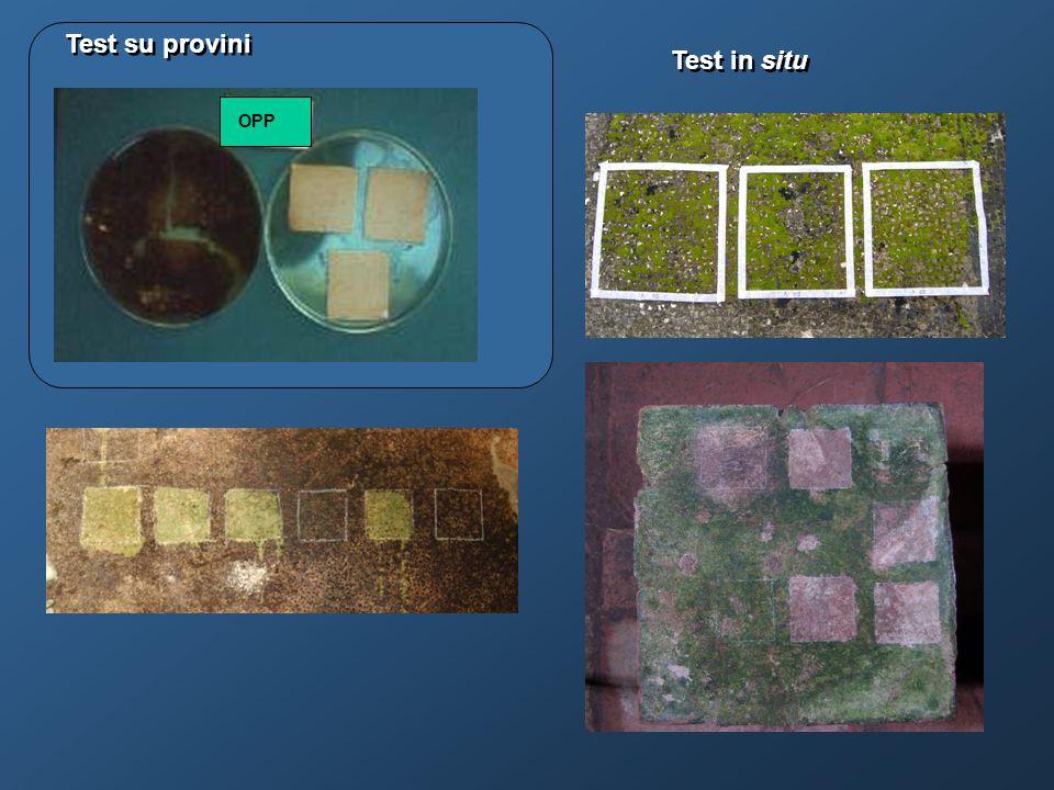 Test di efficacia H 2 O 2 tamponata – su travertino Erbicidi e biocidi a confronto su cuscinetti di muschio – Ostia antica
