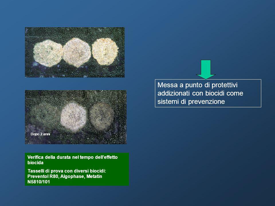 Dopo 2 anni Verifica della durata nel tempo dell'effetto biocida Tasselli di prova con diversi biocidi: Preventol R80, Algophase, Metatin N5810/101 Me