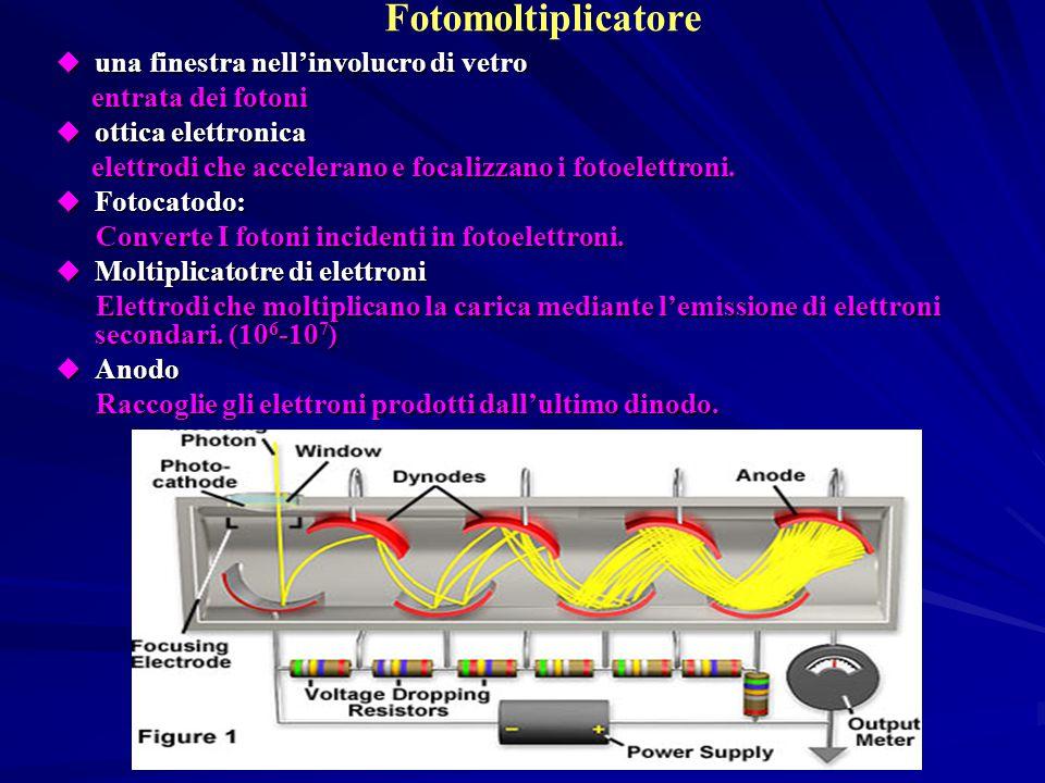 Fotocatodo  Gli elettroni vengono emessi con energia cinetica: La maggior parte degli elettroni prodotti diffondono nel fotocatodo rilasciando parte della loro energia e solo quelli che raggiungono l ' interfaccia tra il fotocatodo e il vuoto con energia sufficiente a superare il potenziale di estrazione (Ф~1eV) riescono ad uscire e vengono quindi accelerati e focalizzati da un elettrodo sul primo dinodo.
