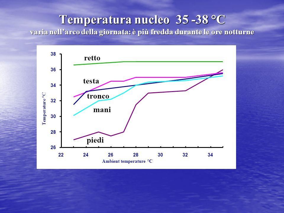 26 28 30 32 34 36 38 22242628303234 Ambient temperature °C Temperature °C piedi retto testa tronco mani Temperatura nucleo 35 -38 °C varia nell'arco d