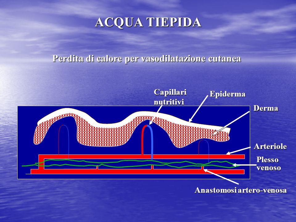 Perdita di calore per vasodilatazione cutanea Arteriole Plesso venoso Capillari nutritivi Anastomosi artero-venosa Epiderma Derma ACQUA TIEPIDA