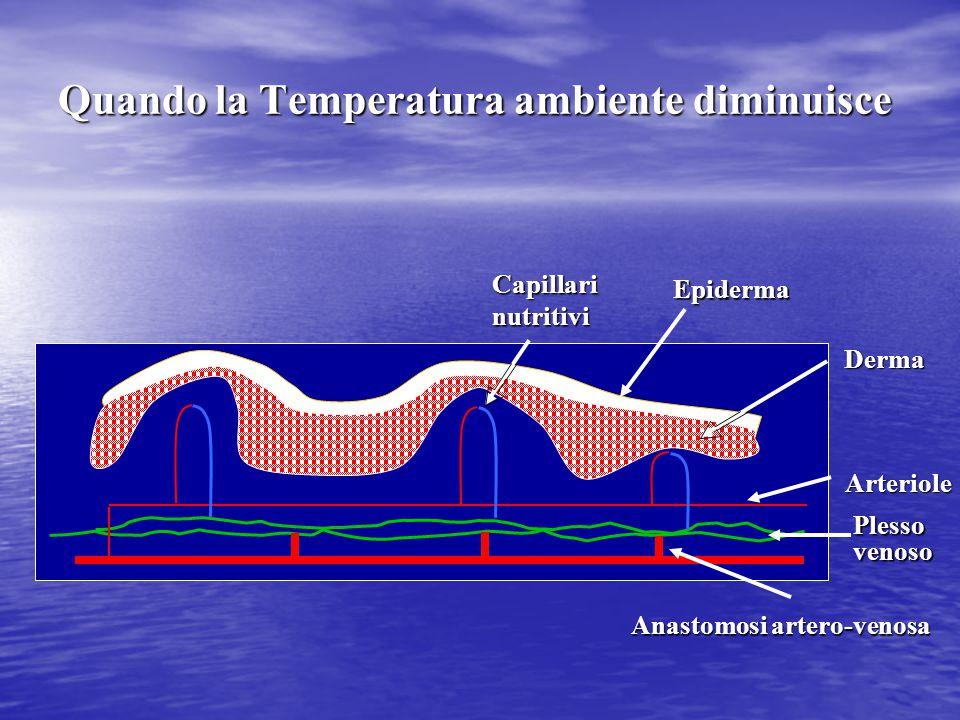 Capillari nutritivi Epiderma Arteriole Plesso venoso Derma Anastomosi artero-venosa Quando la Temperatura ambiente diminuisce