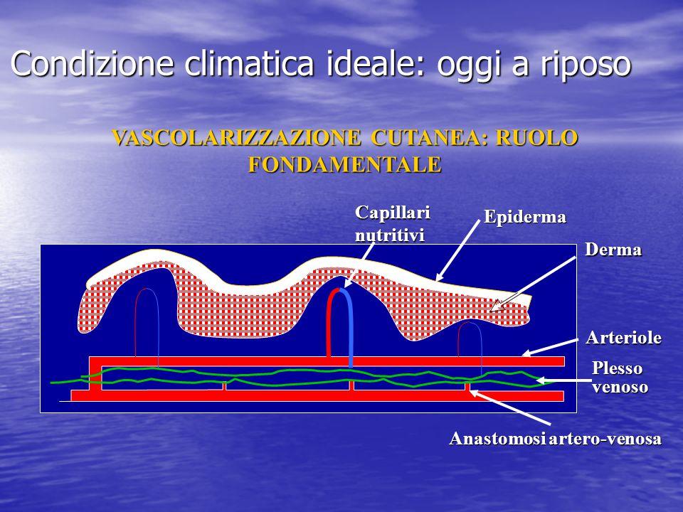 Arteriole Plesso venoso Capillari nutritivi Anastomosi artero-venosa Epiderma Derma Condizione climatica ideale: oggi a riposo VASCOLARIZZAZIONE CUTAN