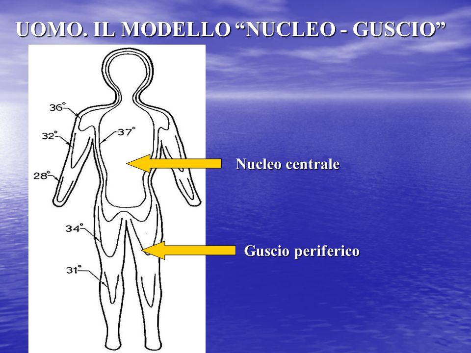 """UOMO. IL MODELLO """"NUCLEO - GUSCIO"""" Nucleo centrale Guscio periferico"""