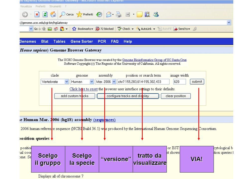 Scelgo il gruppo Scelgo la specie versione tratto da visualizzareVIA!
