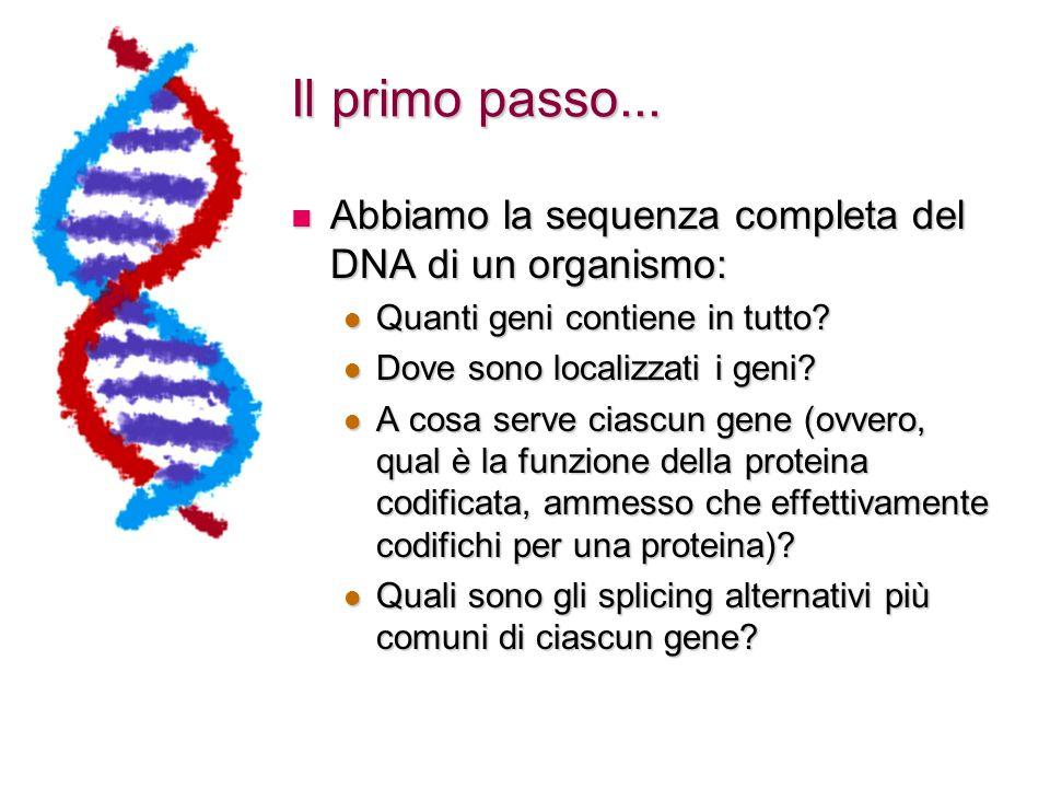 L'evoluzione al lavoro Duplicazione Speciazione uomo/topo SHH DHH uomo IHH SHH DHH topo IHH HH Drosophila Ad ogni duplicazione compare un nuovo HH HH Oggi milioni di anni fa
