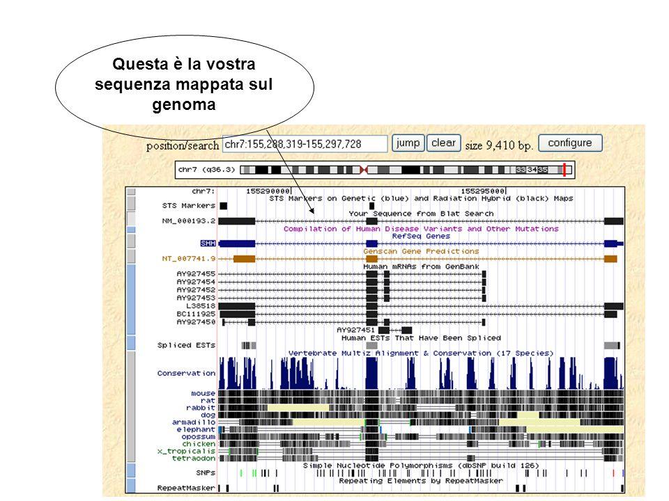 Questa è la vostra sequenza mappata sul genoma