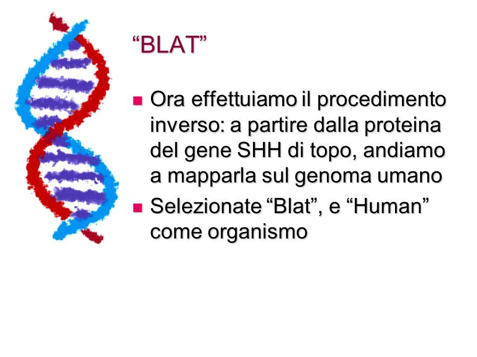 BLAT Ora effettuiamo il procedimento inverso: a partire dalla proteina del gene SHH di topo, andiamo a mapparla sul genoma umano Ora effettuiamo il procedimento inverso: a partire dalla proteina del gene SHH di topo, andiamo a mapparla sul genoma umano Selezionate Blat , e Human come organismo Selezionate Blat , e Human come organismo