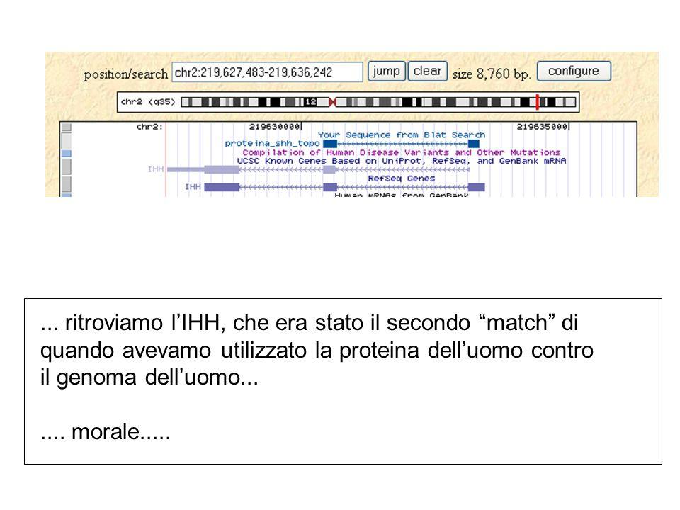 """... ritroviamo l'IHH, che era stato il secondo """"match"""" di quando avevamo utilizzato la proteina dell'uomo contro il genoma dell'uomo....... morale...."""