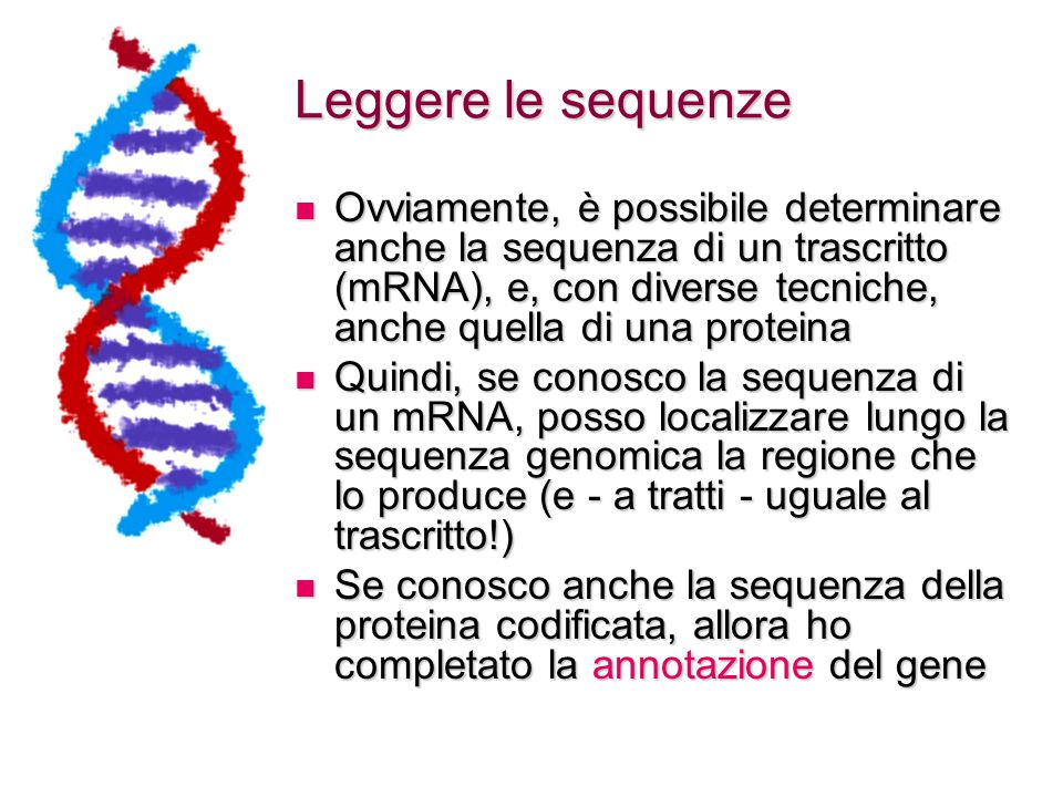 Leggere le sequenze Ovviamente, è possibile determinare anche la sequenza di un trascritto (mRNA), e, con diverse tecniche, anche quella di una proteina Ovviamente, è possibile determinare anche la sequenza di un trascritto (mRNA), e, con diverse tecniche, anche quella di una proteina Quindi, se conosco la sequenza di un mRNA, posso localizzare lungo la sequenza genomica la regione che lo produce (e - a tratti - uguale al trascritto!) Quindi, se conosco la sequenza di un mRNA, posso localizzare lungo la sequenza genomica la regione che lo produce (e - a tratti - uguale al trascritto!) Se conosco anche la sequenza della proteina codificata, allora ho completato la annotazione del gene Se conosco anche la sequenza della proteina codificata, allora ho completato la annotazione del gene