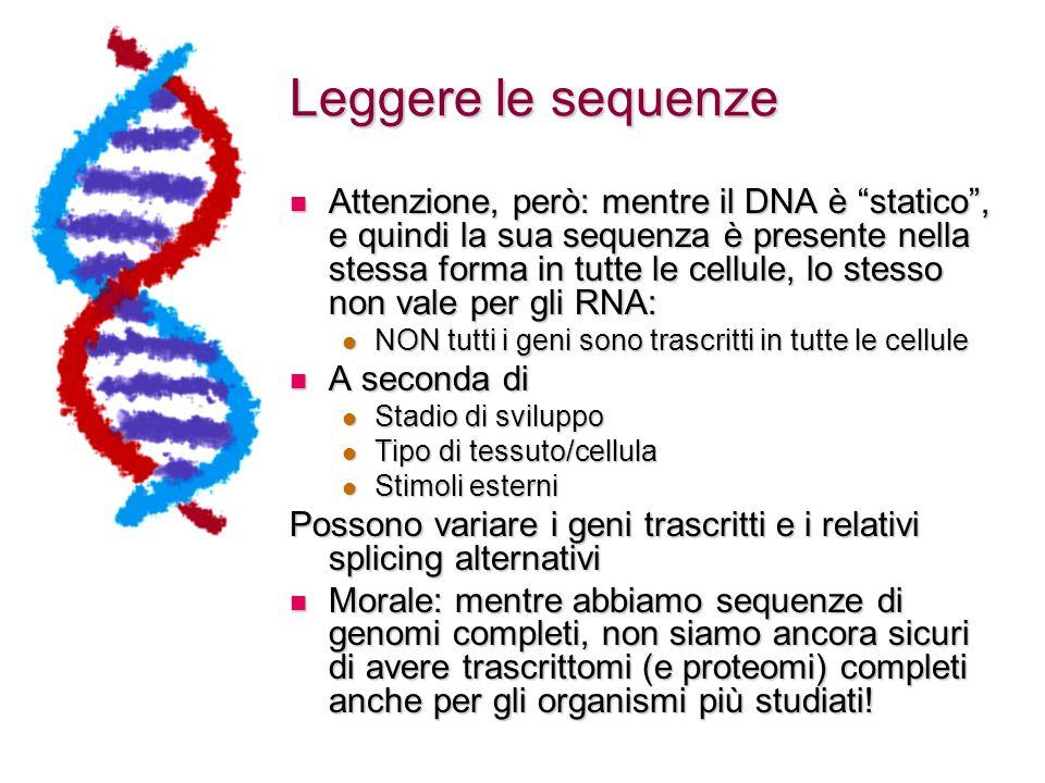 Leggere le sequenze Attenzione, però: mentre il DNA è statico , e quindi la sua sequenza è presente nella stessa forma in tutte le cellule, lo stesso non vale per gli RNA: Attenzione, però: mentre il DNA è statico , e quindi la sua sequenza è presente nella stessa forma in tutte le cellule, lo stesso non vale per gli RNA: NON tutti i geni sono trascritti in tutte le cellule NON tutti i geni sono trascritti in tutte le cellule A seconda di A seconda di Stadio di sviluppo Stadio di sviluppo Tipo di tessuto/cellula Tipo di tessuto/cellula Stimoli esterni Stimoli esterni Possono variare i geni trascritti e i relativi splicing alternativi Morale: mentre abbiamo sequenze di genomi completi, non siamo ancora sicuri di avere trascrittomi (e proteomi) completi anche per gli organismi più studiati.