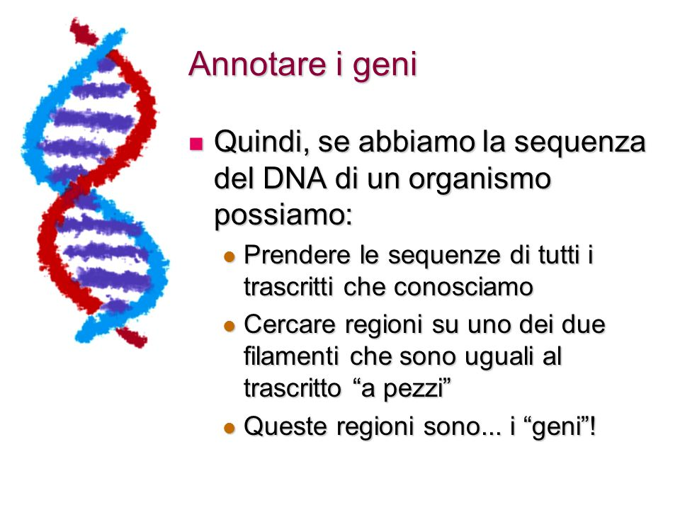 Quindi, se abbiamo la sequenza del DNA di un organismo possiamo: Quindi, se abbiamo la sequenza del DNA di un organismo possiamo: Prendere le sequenze di tutti i trascritti che conosciamo Prendere le sequenze di tutti i trascritti che conosciamo Cercare regioni su uno dei due filamenti che sono uguali al trascritto a pezzi Cercare regioni su uno dei due filamenti che sono uguali al trascritto a pezzi Queste regioni sono...