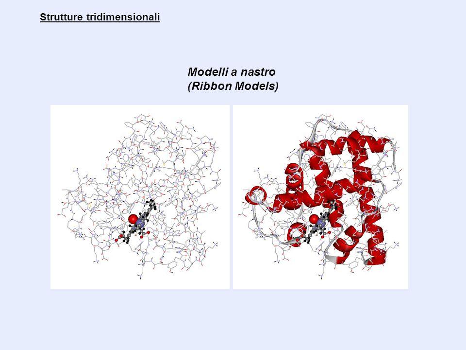 Modelli a nastro e a cartoon Strutture tridimensionali Rappresentazione grafica della struttura dell'enzima diidrofolato riduttasi