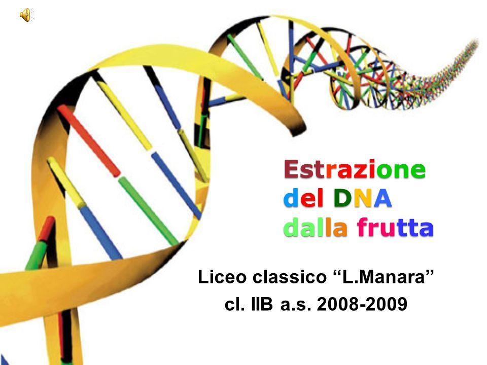 """Estrazione del DNA dalla frutta Liceo classico """"L.Manara"""" cl. IIB a.s. 2008-2009"""