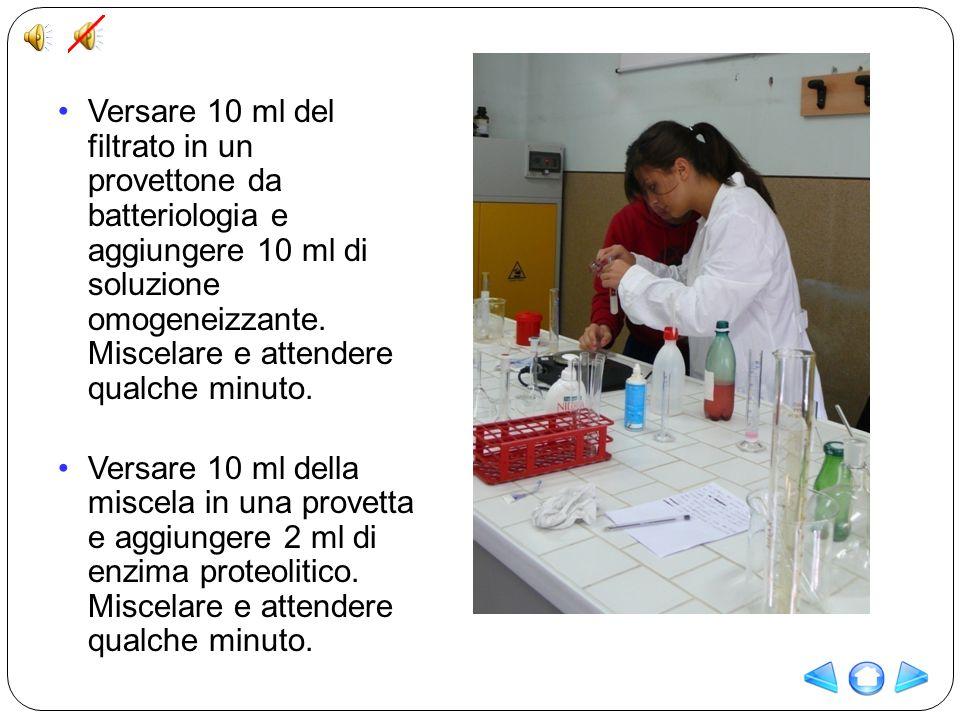 Versare 10 ml del filtrato in un provettone da batteriologia e aggiungere 10 ml di soluzione omogeneizzante. Miscelare e attendere qualche minuto. Ver