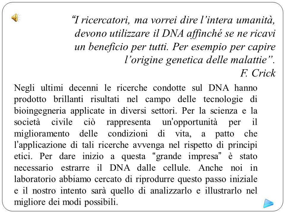 Indice generale Cos'è il DNA Qual è il suo ruolo Qual è lo scopo dell'esperimento Cosa occorre Come procedere Conclusioni Ringraziamenti e bibliografia