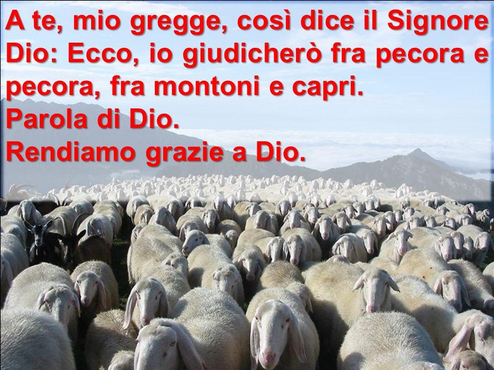 A te, mio gregge, così dice il Signore Dio: Ecco, io giudicherò fra pecora e pecora, fra montoni e capri. Parola di Dio. Rendiamo grazie a Dio.