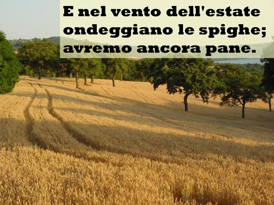 E nel vento dell'estate ondeggiano le spighe; avremo ancora pane.