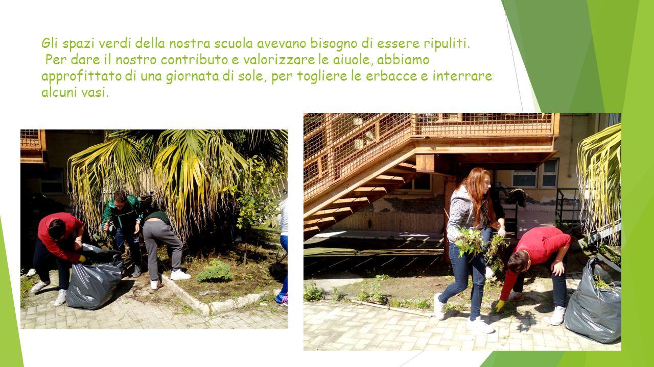 Gli spazi verdi della nostra scuola avevano bisogno di essere ripuliti. Per dare il nostro contributo e valorizzare le aiuole, abbiamo approfittato di