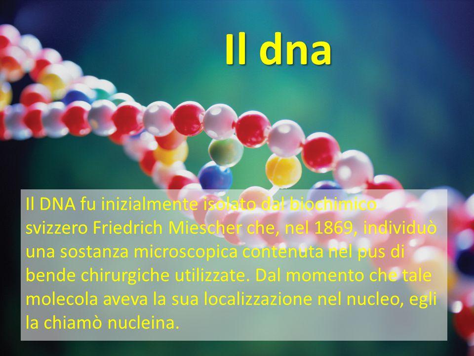 Il DNA Il DNA, acido desossiribonucleico, è la molecola che contiene le informazioni necessarie per il funzionamento di ogni essere vivente: le informazioni genetiche, che ciascuno di noi eredita dai propri genitori.