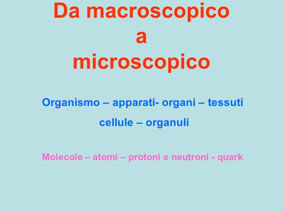 Da macroscopico a microscopico Organismo – apparati- organi – tessuti cellule – organuli Molecole – atomi – protoni e neutroni - quark