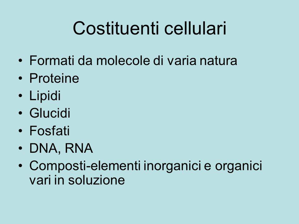 Costituenti cellulari Formati da molecole di varia natura Proteine Lipidi Glucidi Fosfati DNA, RNA Composti-elementi inorganici e organici vari in sol