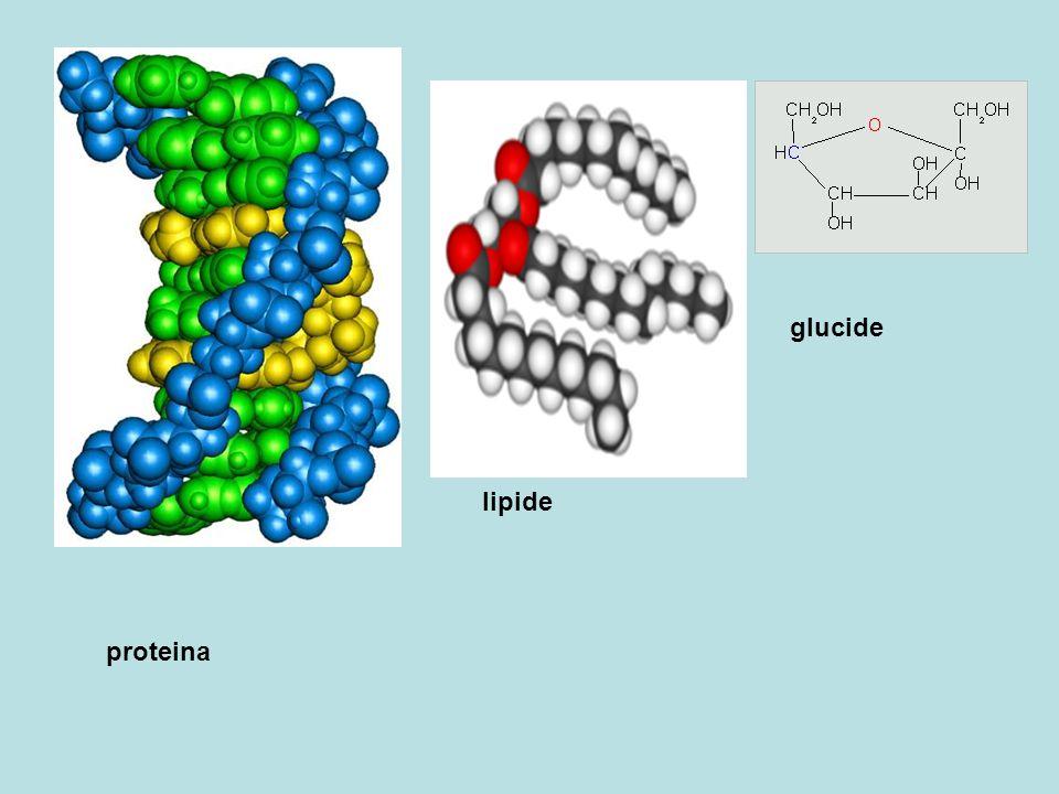 proteina lipide glucide