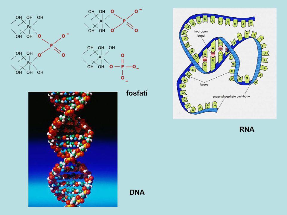 DNA RNA fosfati