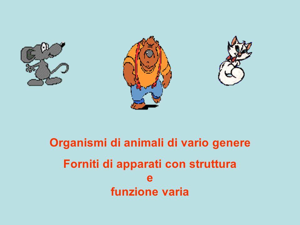 Organismi di animali di vario genere Forniti di apparati con struttura e funzione varia
