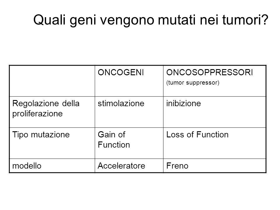 Quali geni vengono mutati nei tumori? ONCOGENIONCOSOPPRESSORI (tumor suppressor) Regolazione della proliferazione stimolazioneinibizione Tipo mutazion