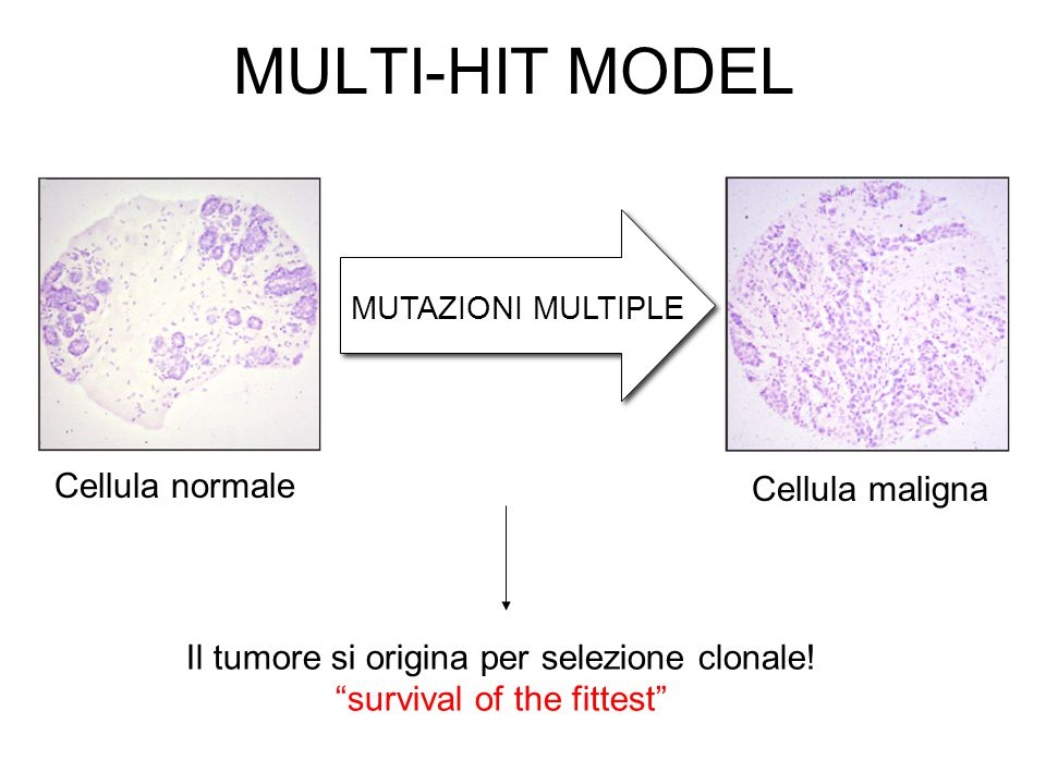 """MULTI-HIT MODEL MUTAZIONI MULTIPLE Cellula normale Cellula maligna Il tumore si origina per selezione clonale! """"survival of the fittest"""""""