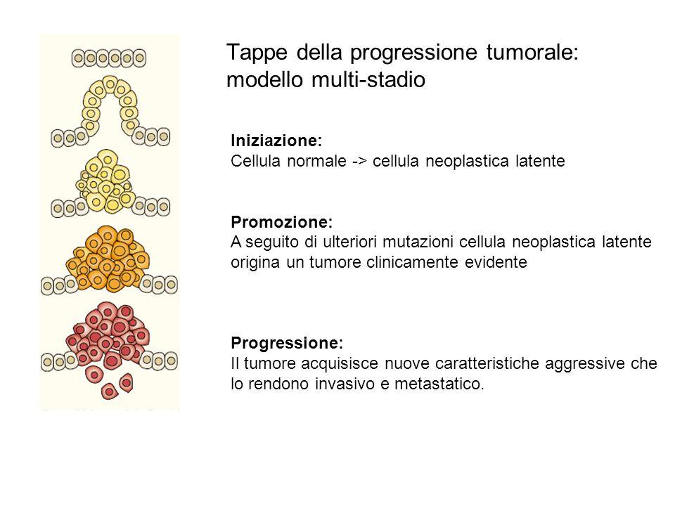 Iniziazione: Cellula normale -> cellula neoplastica latente Promozione: A seguito di ulteriori mutazioni cellula neoplastica latente origina un tumore