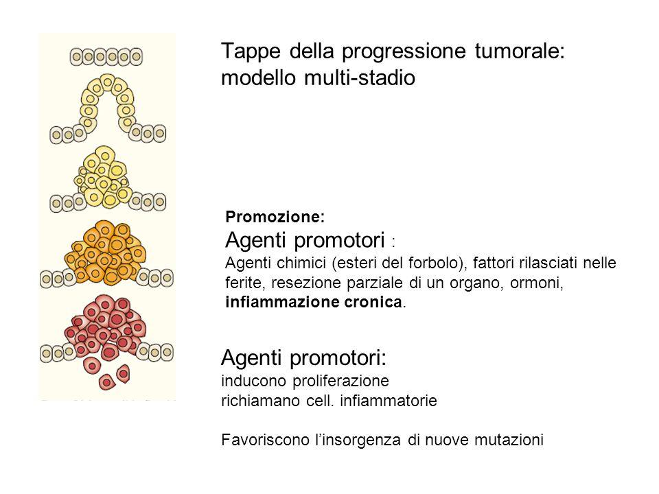 Iniziazione: Cellula normale -> cellula neoplastica latente Promozione: Agenti promotori : Agenti chimici (esteri del forbolo), fattori rilasciati nel