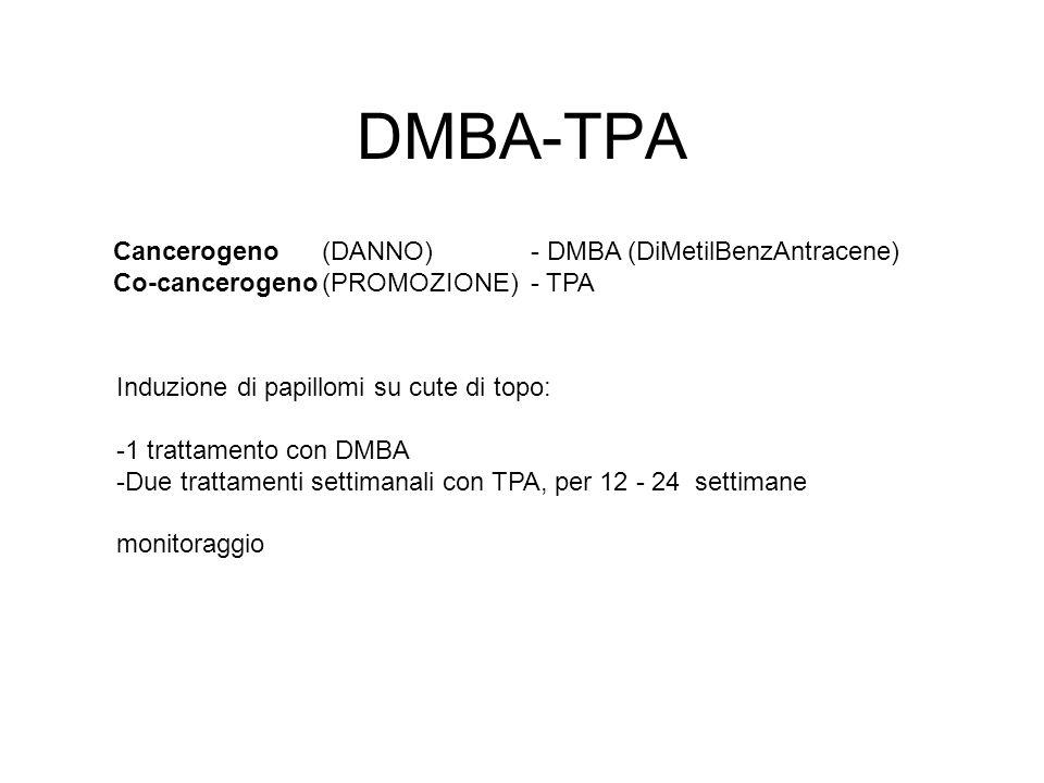 DMBA-TPA Cancerogeno(DANNO)- DMBA (DiMetilBenzAntracene) Co-cancerogeno(PROMOZIONE)- TPA Induzione di papillomi su cute di topo: -1 trattamento con DM