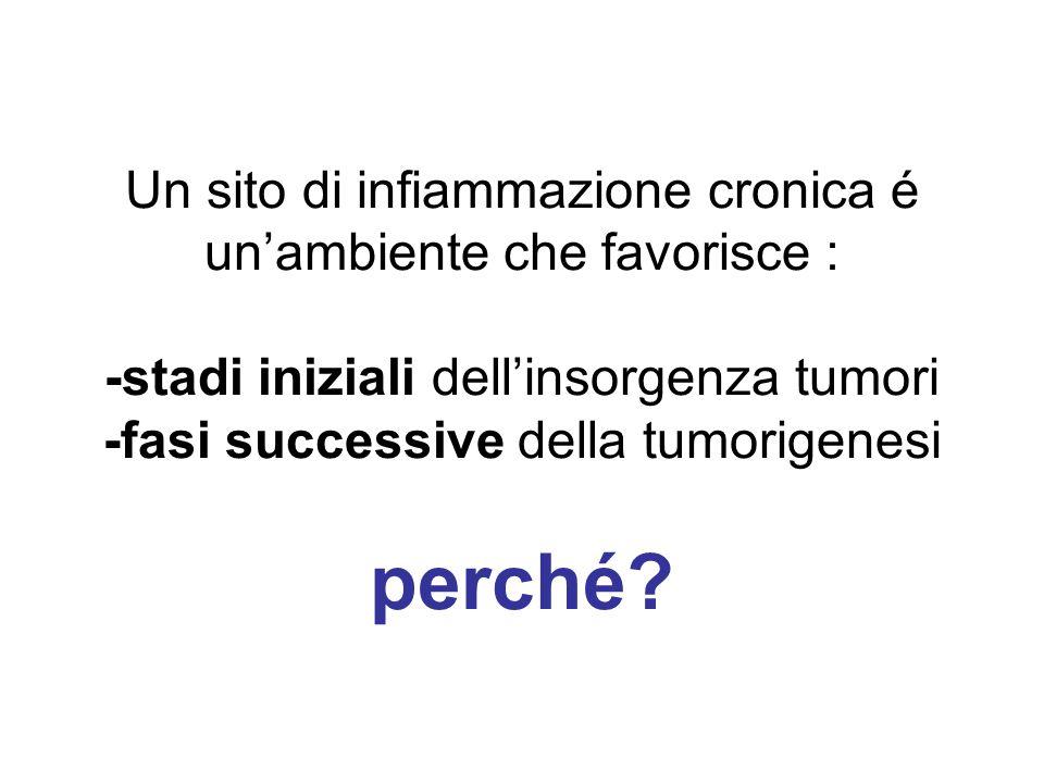 Un sito di infiammazione cronica é un'ambiente che favorisce : -stadi iniziali dell'insorgenza tumori -fasi successive della tumorigenesi perché?