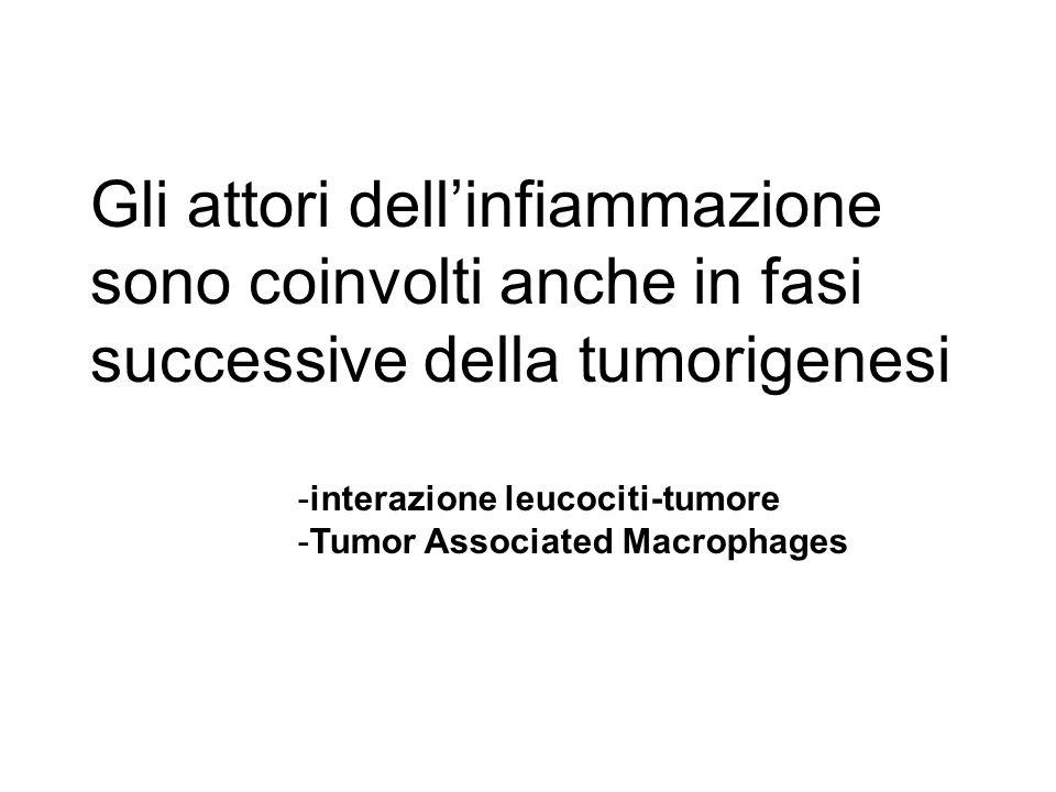 Gli attori dell'infiammazione sono coinvolti anche in fasi successive della tumorigenesi -interazione leucociti-tumore -Tumor Associated Macrophages