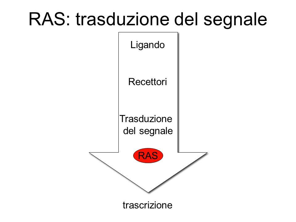 RAS: trasduzione del segnale Ligando Recettori Trasduzione del segnale trascrizione RAS