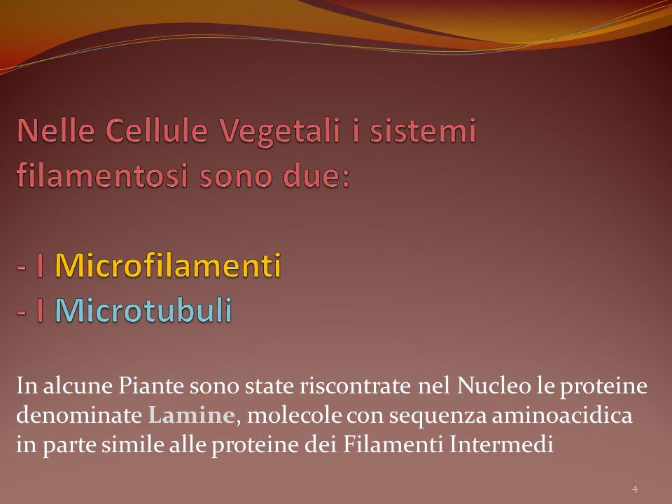 In alcune Piante sono state riscontrate nel Nucleo le proteine denominate Lamine, molecole con sequenza aminoacidica in parte simile alle proteine dei