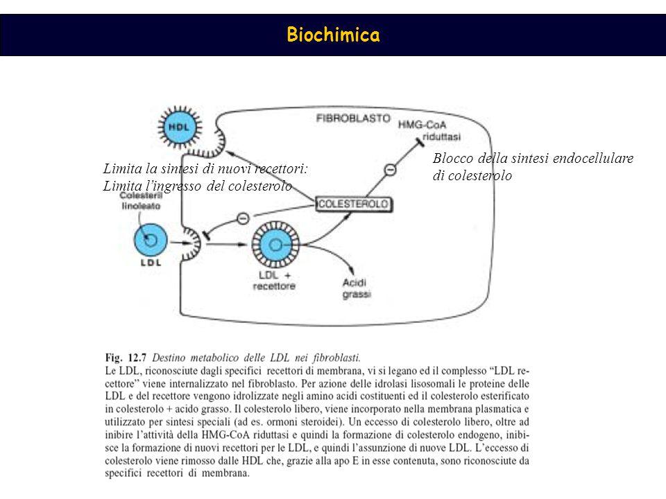 Blocco della sintesi endocellulare di colesterolo Limita la sintesi di nuovi recettori: Limita l ' ingresso del colesterolo