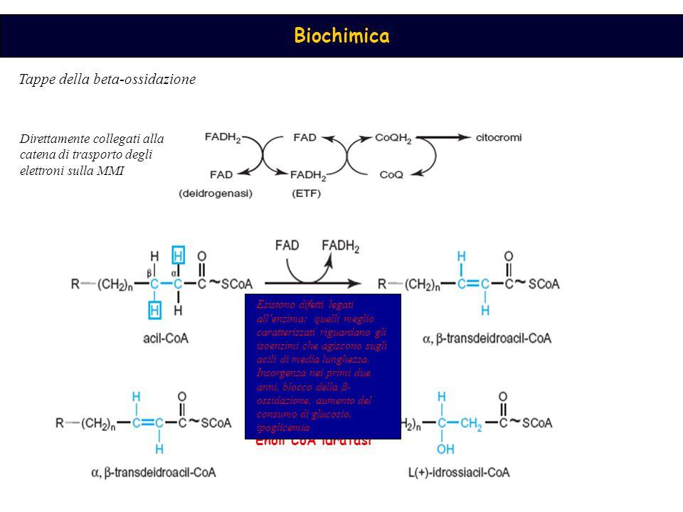 AcilCoA DH Tappe della beta-ossidazione H2OH2O Enoil CoA idratasi Esistono difetti legati all'enzima: quelli meglio caratterizzati riguardano gli isoenzimi che agiscono sugli acili di media lunghezza.