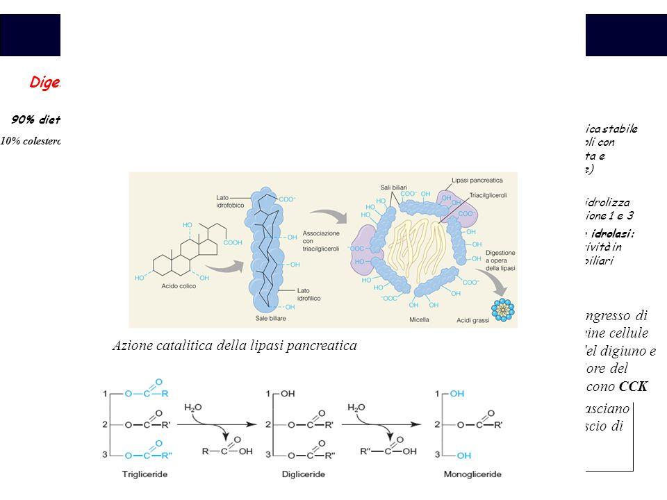 Biochimica Gli acidi grassi liberi, il colesterolo libero e i 2-monoacilgliceroli sono i prodotti principali della degradazione dei lipidi Formano micelle miste con i Sali biliari (non quelli con catene corte o medie) Le micelle interagiscono con la membrana dell ' orletto a spazzola degli enterociti i quali presentano una pellicola umida ferma attraverso la quale i grassi vengono adsorbiti