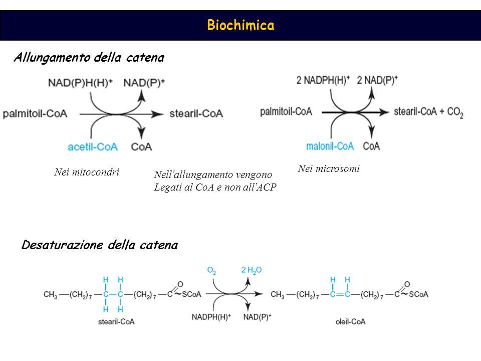 Biochimica Nei mitocondri Nei microsomi Nell ' allungamento vengono Legati al CoA e non all ' ACP Allungamento della catena Desaturazione della catena