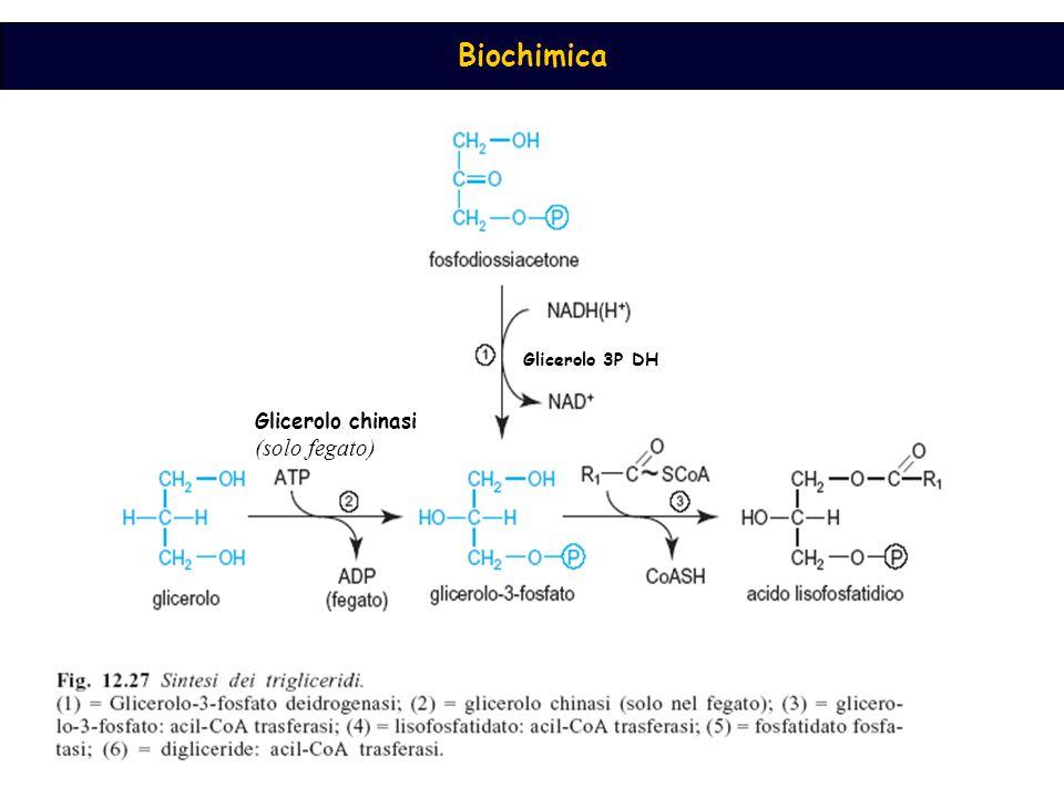 Biochimica Glicerolo 3P DH Glicerolo chinasi (solo fegato)